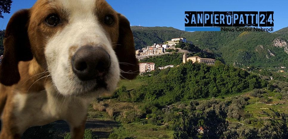 Cani_avvelenamento_San_Piero_Patti_slider_001